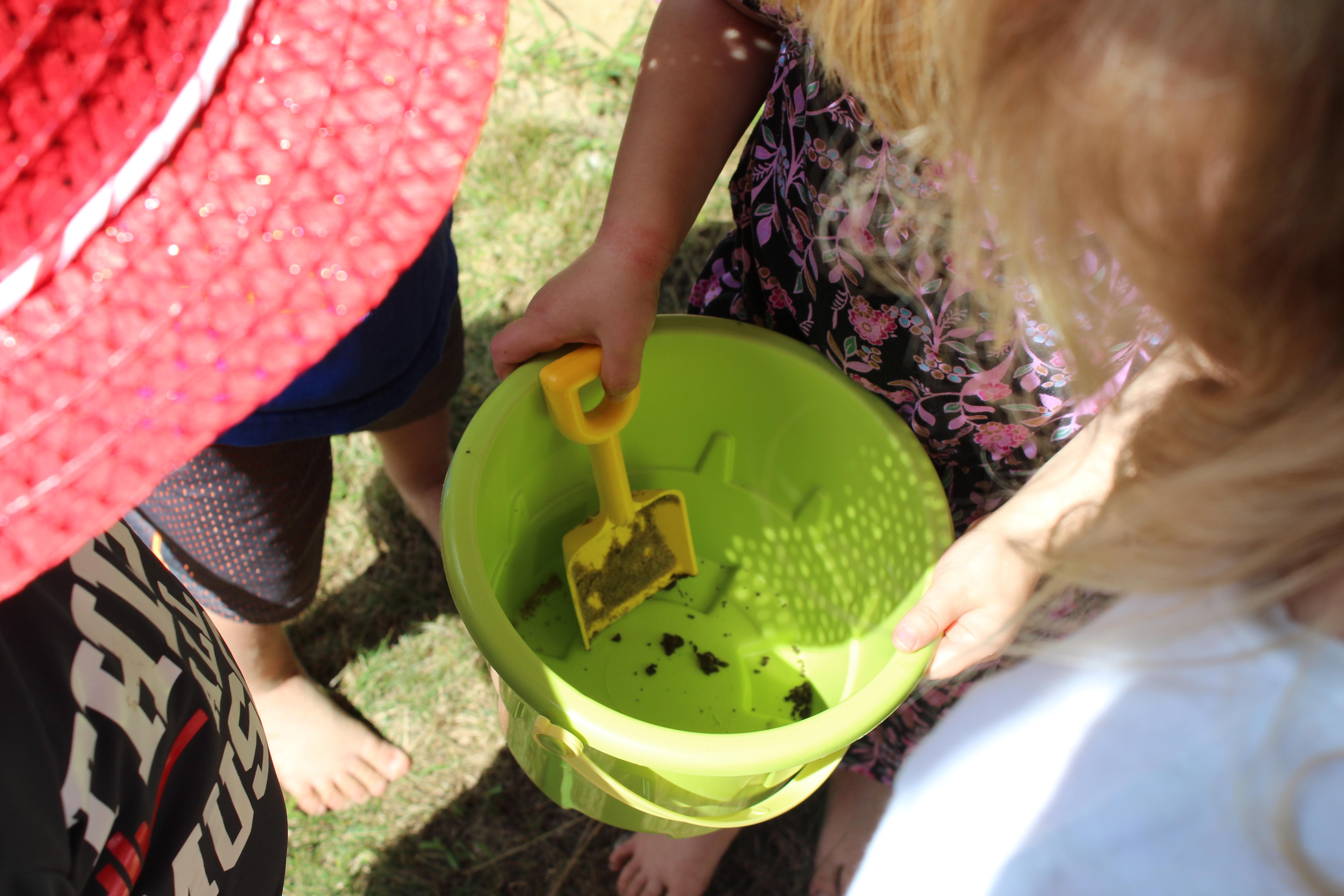 004faeefcdc Frog Hunt In The Sunshine Yards – Tam s Sunshine House